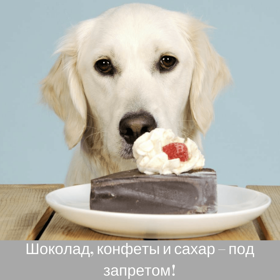 Шоколад, конфеты и сахар – под запретом!
