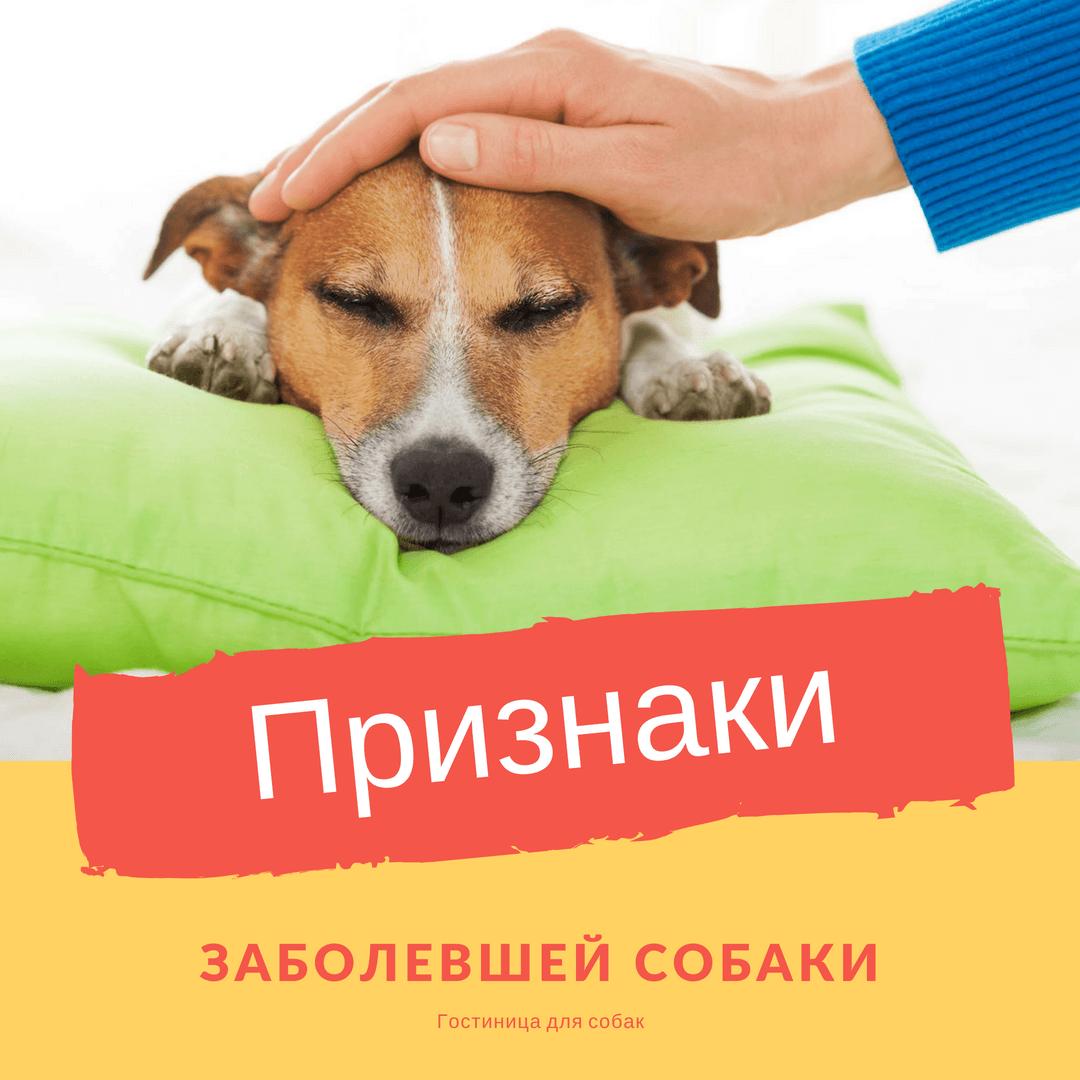 Признаки заболевшей собаки