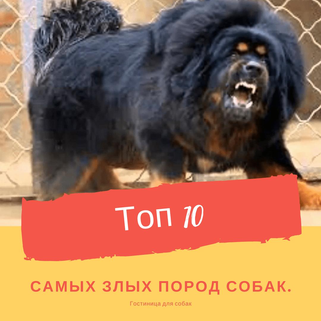 Топ 10 самых злых пород собак.
