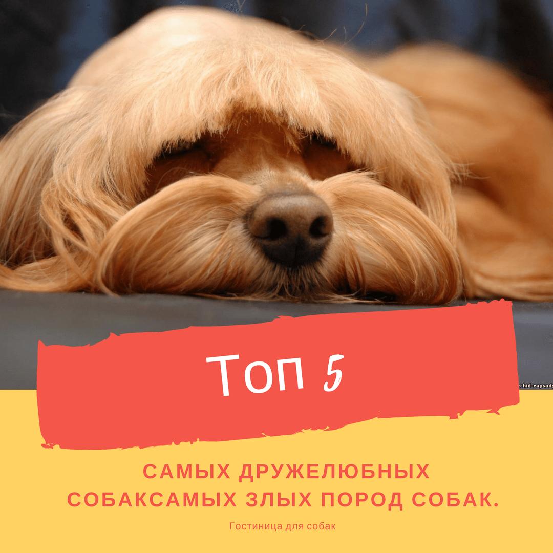 Топ-5 самых дружелюбных собак