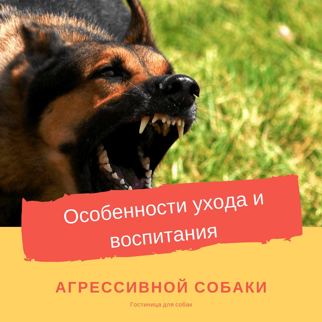 Особенности ухода и воспитания агрессивной собаки