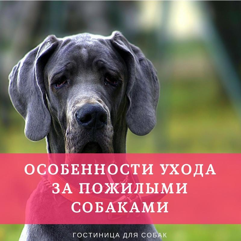 Особенности ухода за пожилыми собаками