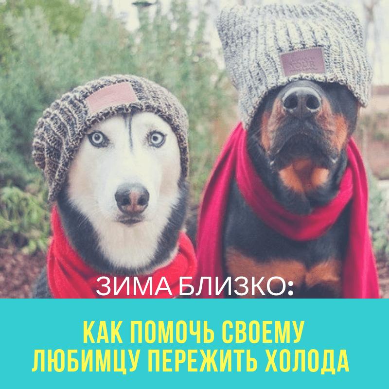 Зима близко: как помочь своему любимцу пережить холода