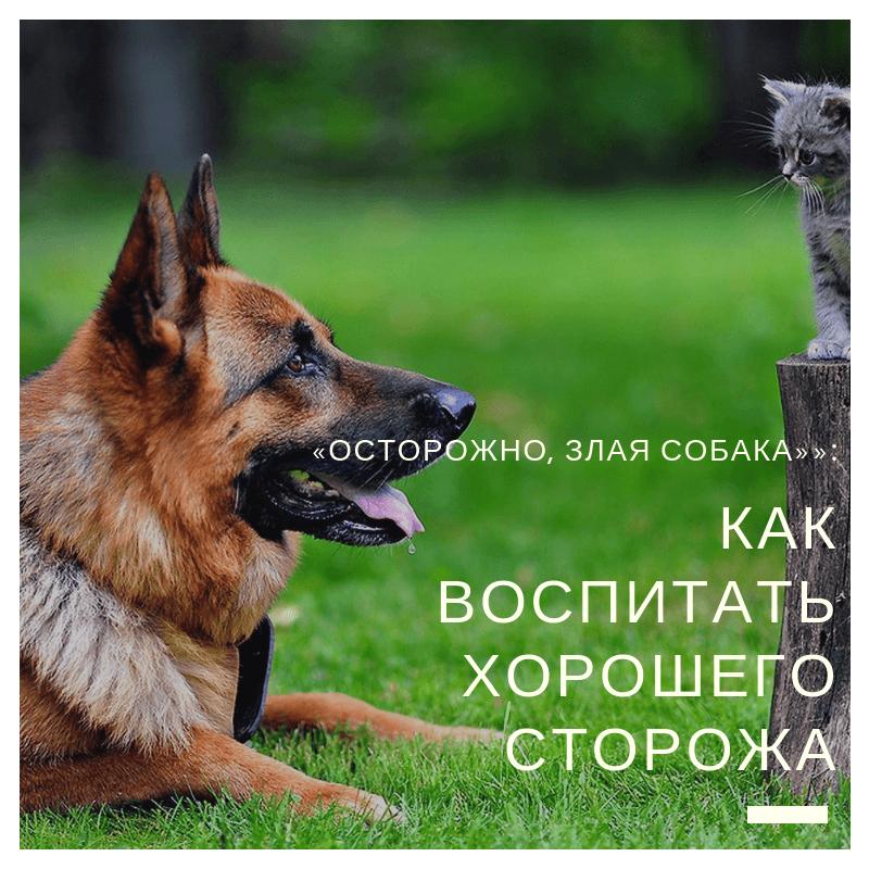 «Осторожно, злая собака»»: как воспитать хорошего сторожа