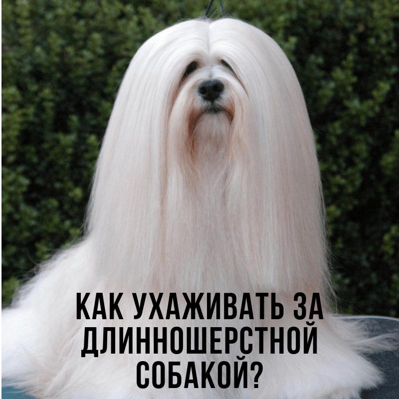 Как ухаживать за длинношерстной собакой?