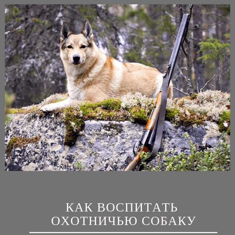 Как воспитать охотничью собаку