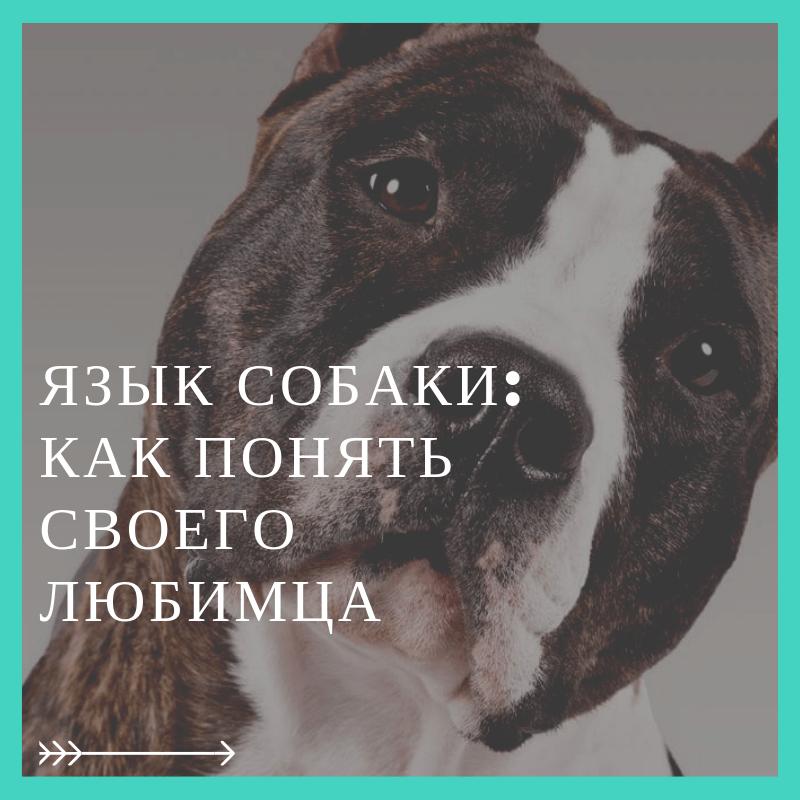Язык собаки: как понять своего любимца