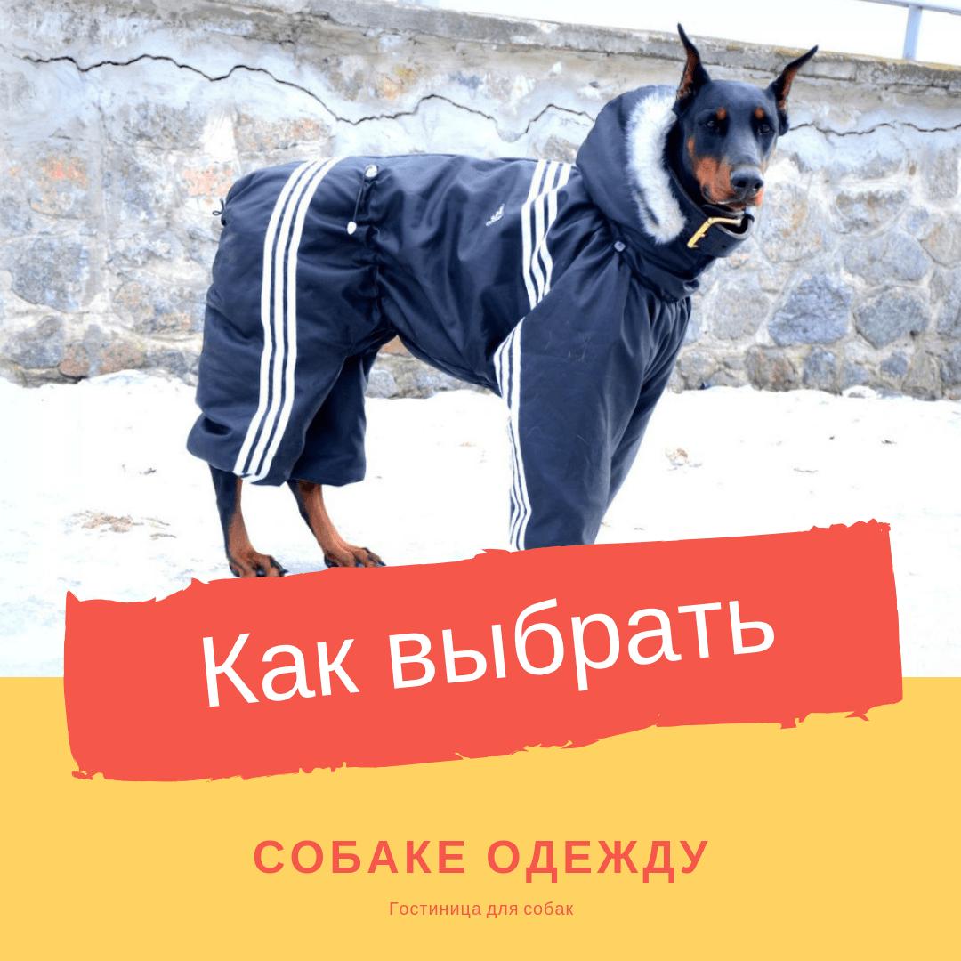 Как выбрать собаке одежду