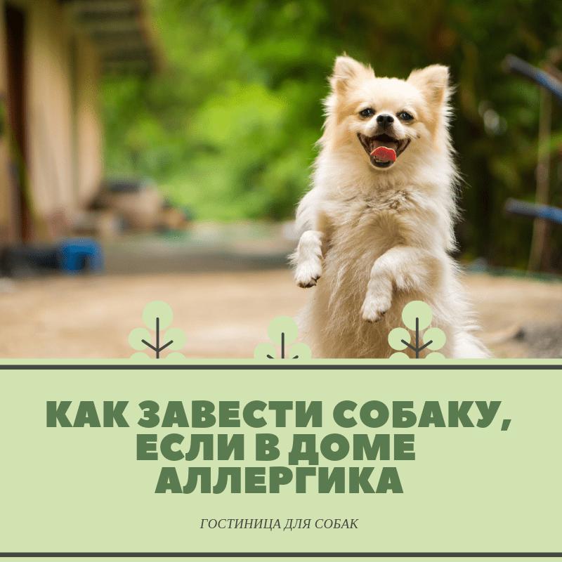 Как завести собаку, если в доме аллергик