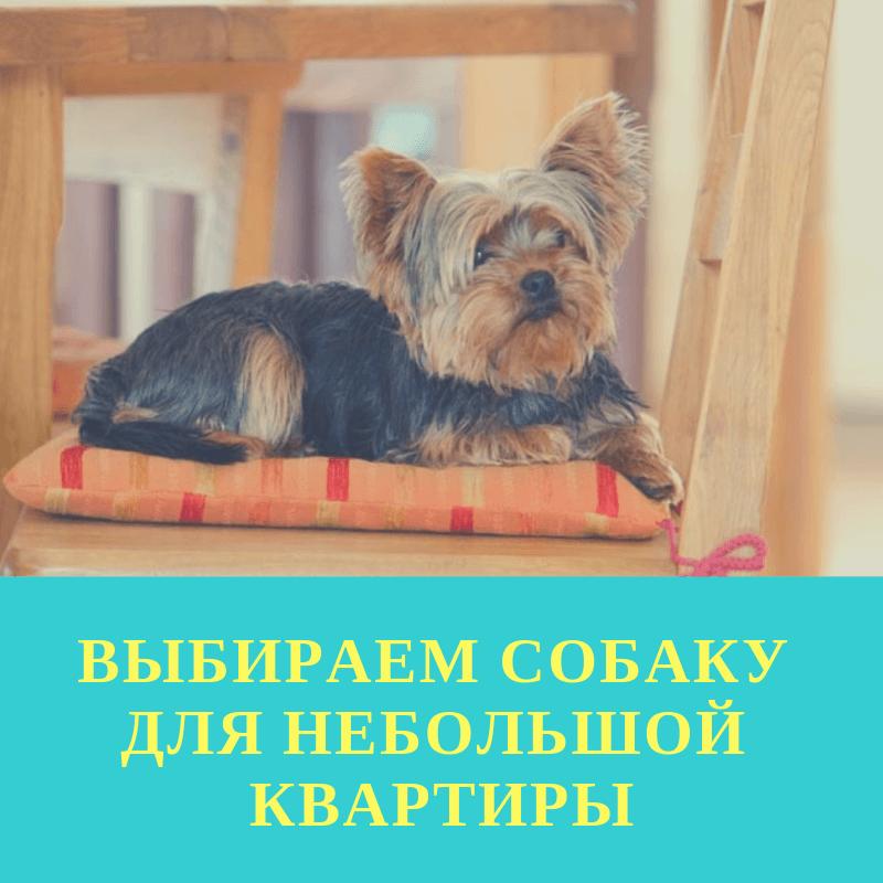 Выбираем собаку для небольшой квартиры