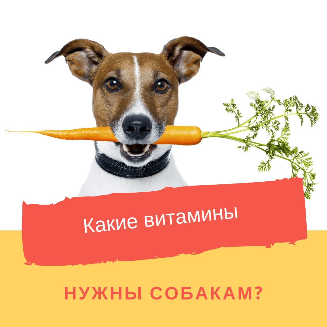 Какие витамины нужны собакам?