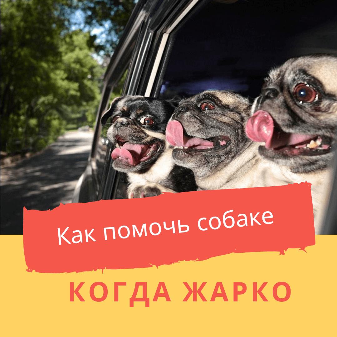 Как помочь собаке когда жарко