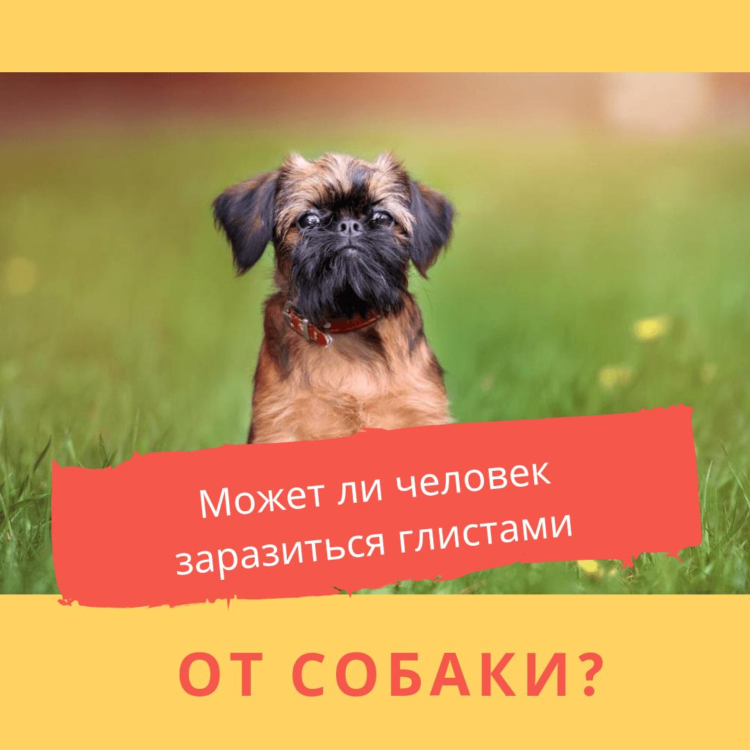 Узнать есть ли у собаки глисты, опасность для человека, симптомы