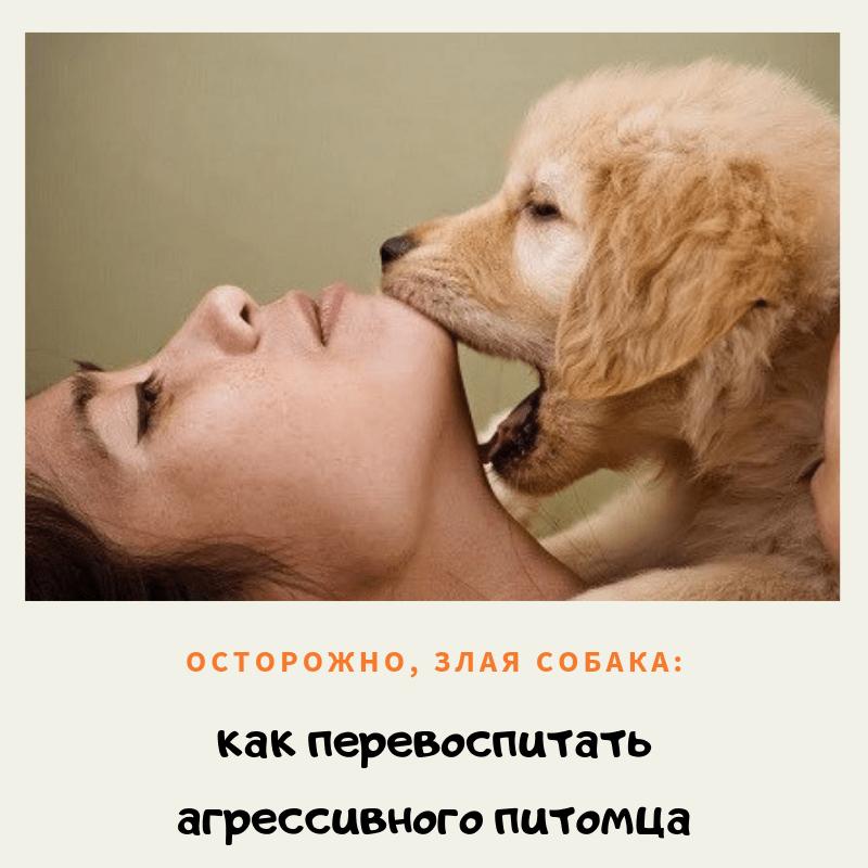 Осторожно, злая собака: как перевоспитать агрессивного питомца