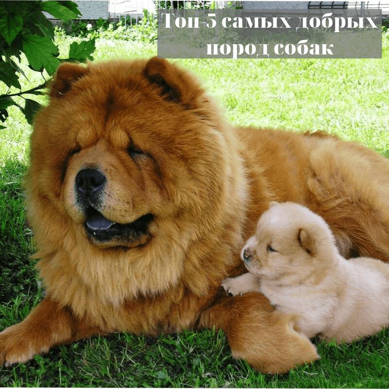 Топ-5 самых добрых пород собак