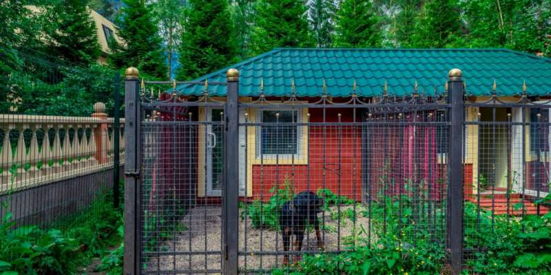 Гостиница для собак в Санкт-Петербурге
